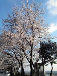 2013-03-28-17-09-44_photo