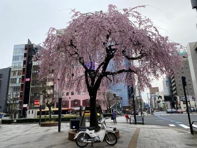 21/03/25伝説のすた丼屋八王子店 06