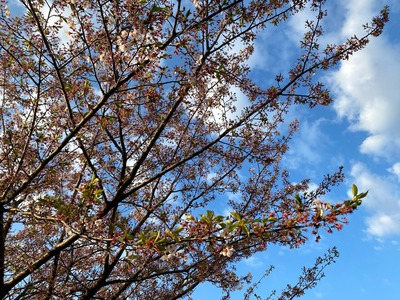 20/04/11ラーメン大桜十日市場本店 02