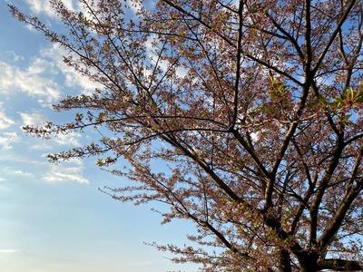 20/04/11ラーメン大桜十日市場本店 01