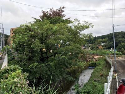 16/09/14め二郎小つけ麺(ニンニク、野菜、アブラ)02