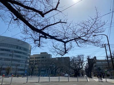 21/03/10とりビアー八王子みなみ野店 01