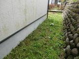 04_A_外壁の藻_03