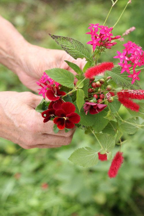 晩秋の庭 赤い花を集めてみました