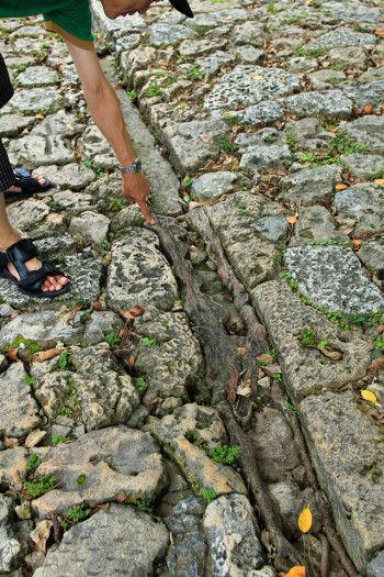 金城村屋の近くにあった ガジュマルの木。 木の根が石畳に沿って力強く伸び、 生命力を感じることができました。
