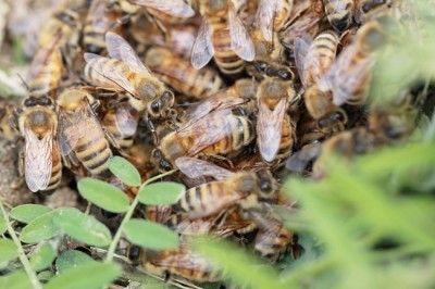 女王蜂が海を越えてやって来た★ ミツバチも活動開始!の春