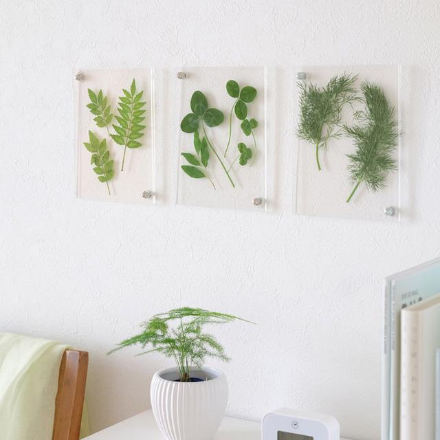 ダイソーのフォトフレームで作る初夏のインテリア♪ グリーンを爽やかに飾ろう