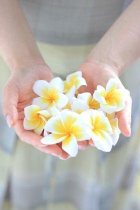 南の島の花 プルメリア