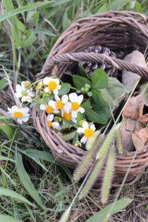 春はもうすぐそこに。野山で植物採集はいかが?