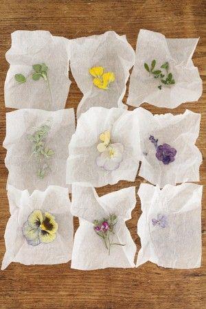 いろいろな小花の押し花をつくりましょう。