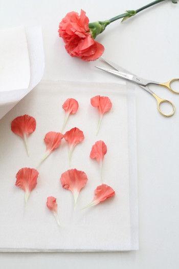 切り花を押し花にするには、 専用の「押し花用乾燥シート」を使います。 カーネーションは 花びらがたくさんついているので、 数枚の花びらを根元から引き抜きます。 乾燥シートに和紙をのせ、 その上に花びらをならべて、 乾燥シートで挟みます。