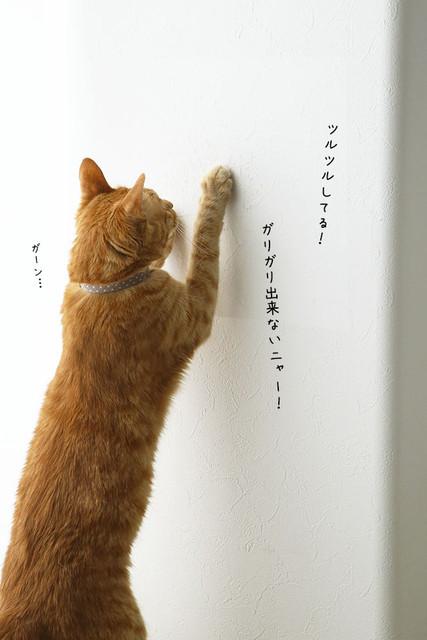 misaeyano_20160611_008