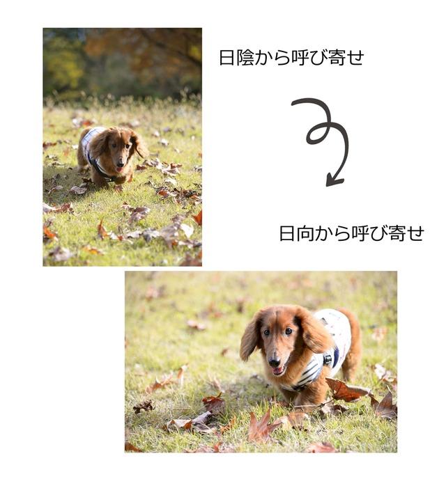 42mtakayama_001_20160122