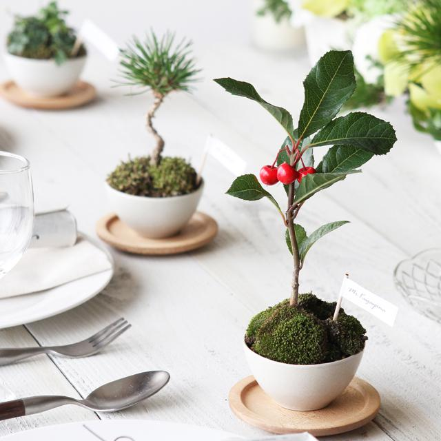 花嫁DIY♪ 初心者でも簡単に作れるミニ盆栽の席札&プチギフト