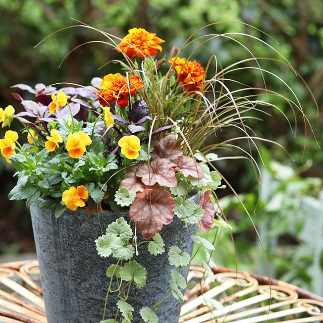 植えた日から楽しめる「寄せ植えの5法則」