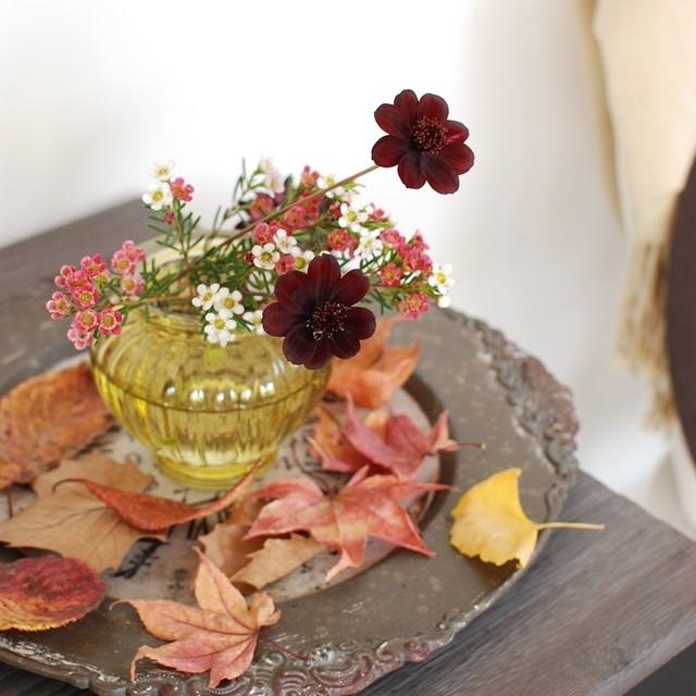 紅葉の落ち葉と飾る、こっくりカラーの秋の花 ~ 深まる秋のデイリーフラワー