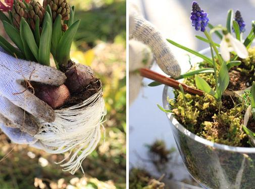 お部屋で楽しむ球根植物の寄せ植え