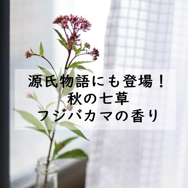 源氏物語にも登場! 秋の七草 フジバカマの香り