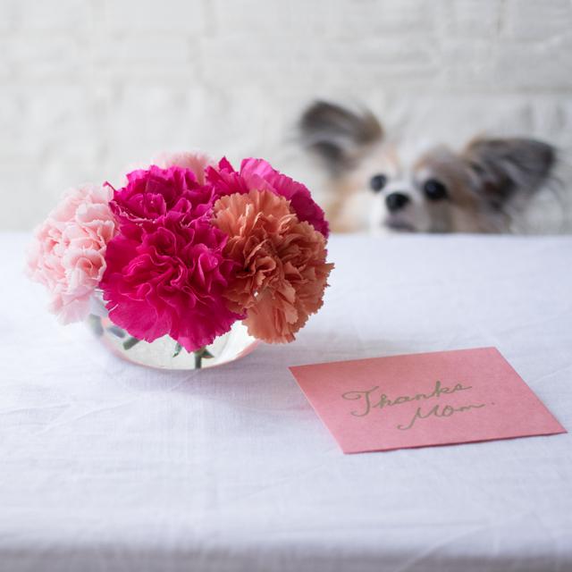 母の日 カーネーション 犬 プレゼント