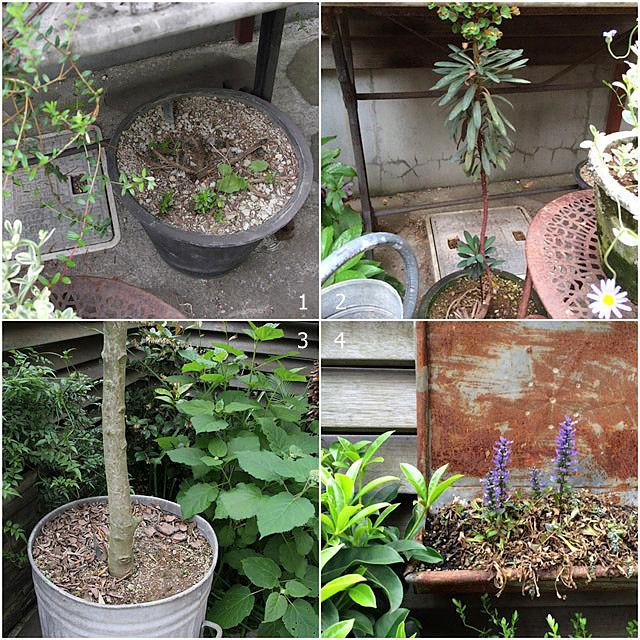 2年目の「BROCANTE」な庭
