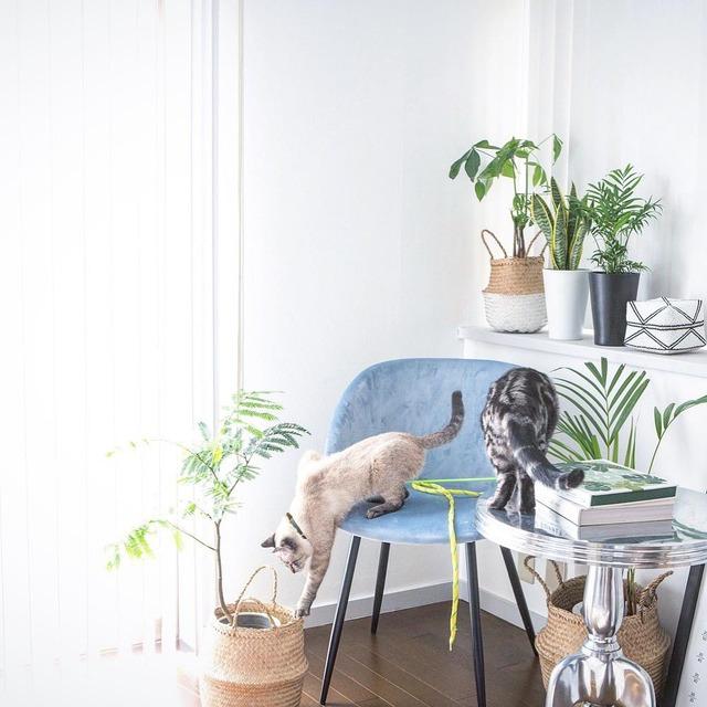 2月22日は猫の日! 猫に安心な観葉植物とは?
