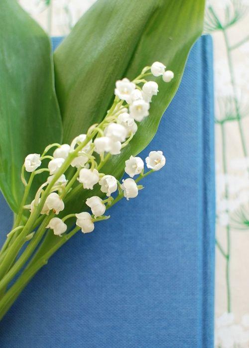 """5月1日は""""すずらんの日"""" 幸せのすずらんで花のある暮らし"""