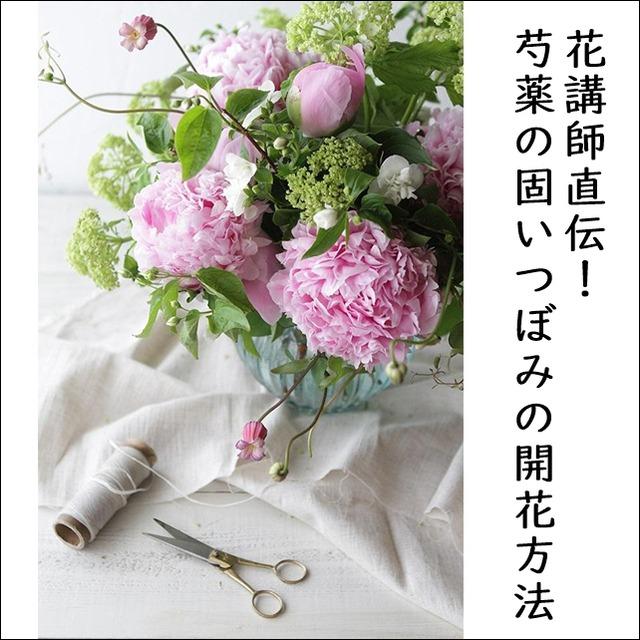 花講師直伝!芍薬の固いつぼみの開花方法