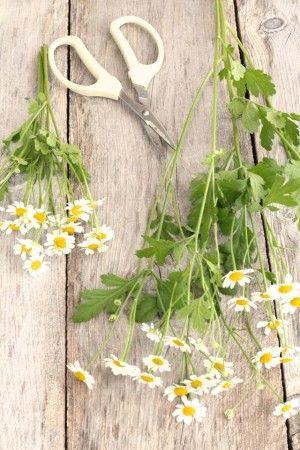 マトレカリアのように、 何本も枝分かれしているような花材は、 枝分かれしているところで切り分けて 高さをそろえると花首をそろえることができ、 ぐっとボリュームアップ。