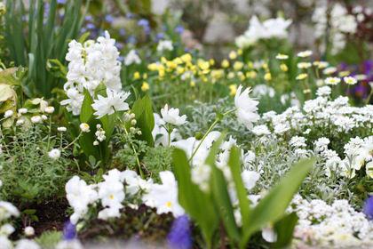 ちょっぴりシシングハースト風なホワイト・ガーデン
