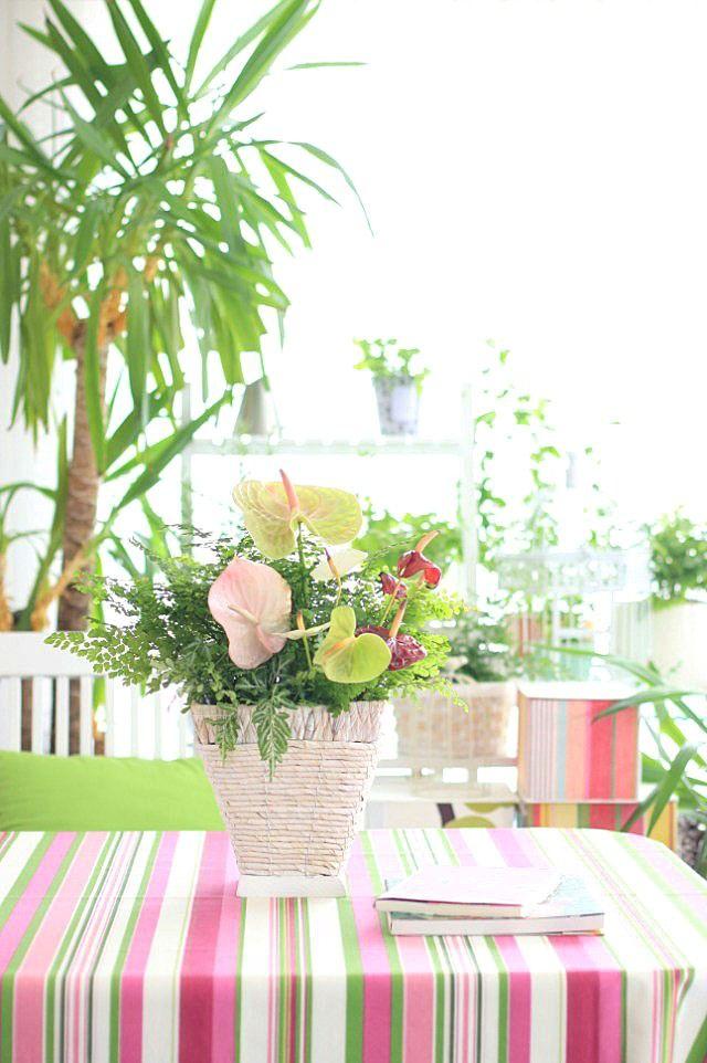 真夏のフラワーアレンジ  ~アンスリウムと観葉植物で寄せ植え風に~