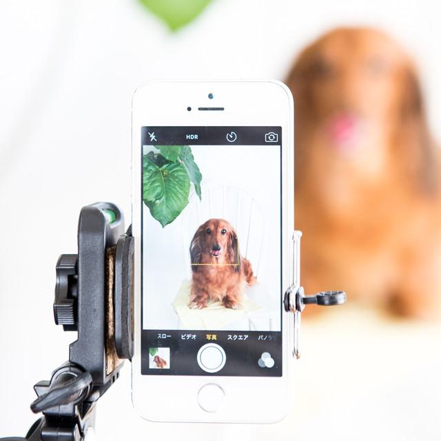ダイソー100円 スマホスタンド使ってみたら楽ちんに愛犬撮影できました