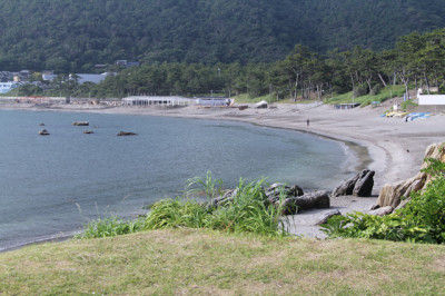 犬を連れて 葉山周辺の小さな旅をしました。 東京から1時間、 海と山に囲まれた気持ちのいい場所です。