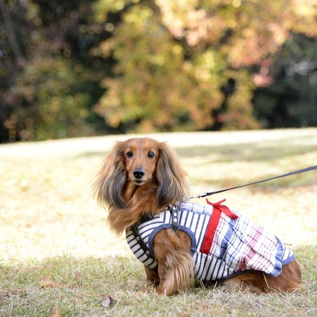 愛犬の可愛さ100倍! キラキラと輝く瞳のワンコを撮る方法