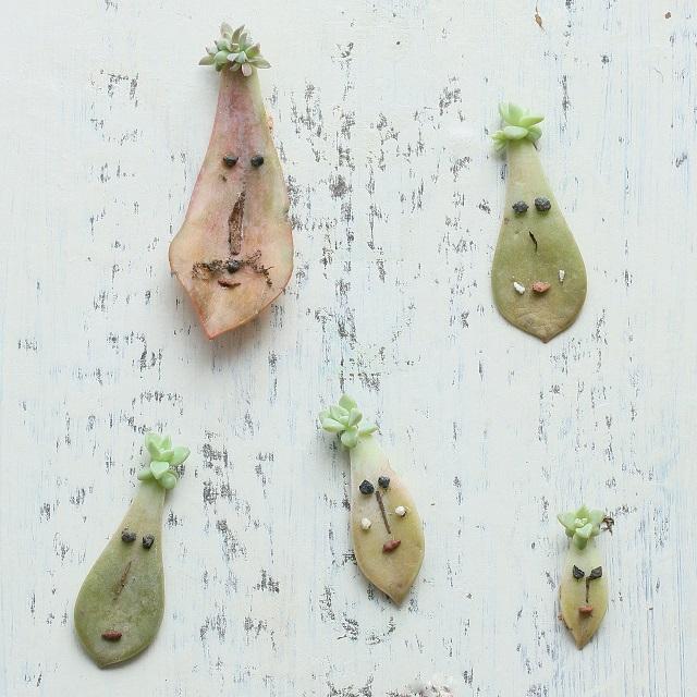 多肉植物の赤ちゃん~落ちた葉っぱを葉挿しで増やしてみませんか