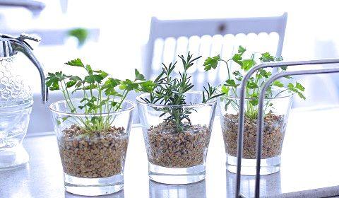 セラミック玉砂利で簡単&キレイに育てるハーブ