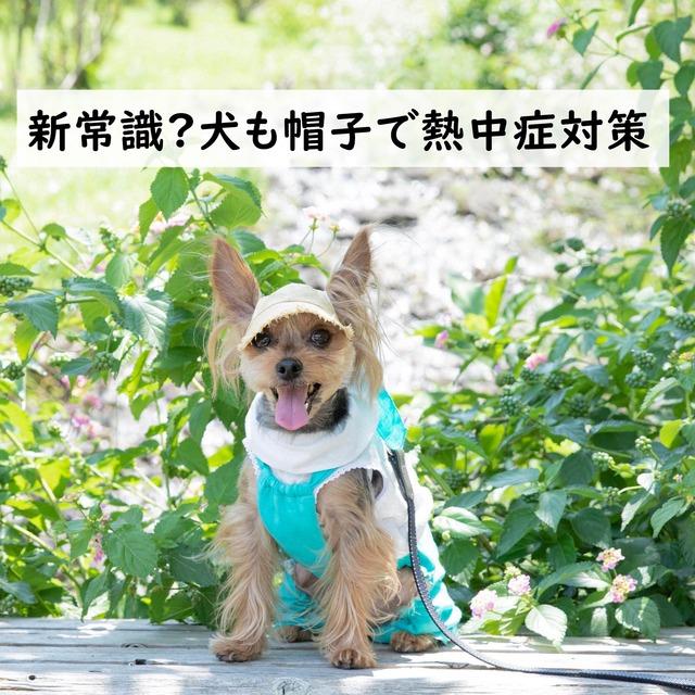 新常識⁈犬も帽子で熱中症対策