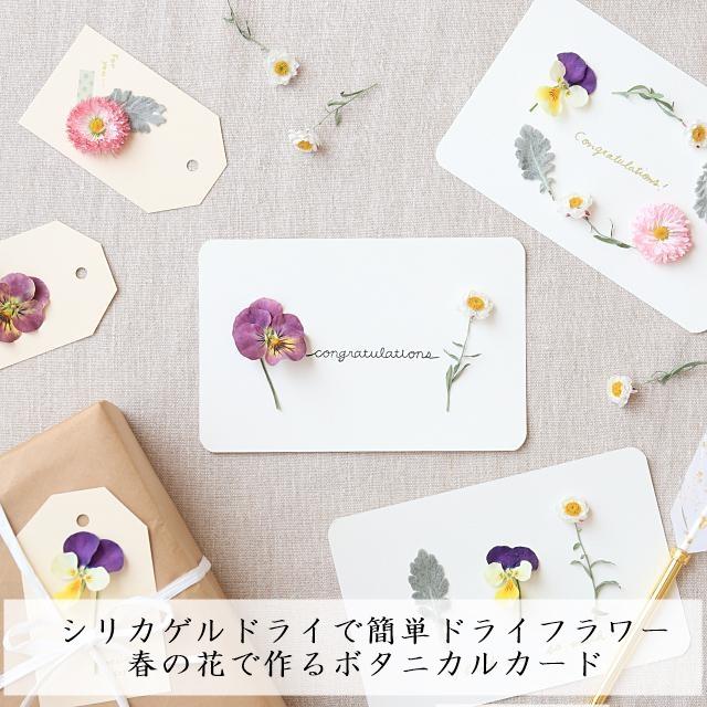 シリカゲルドライで簡単ドライフラワー♪ 春の花で作るボタニカルカード