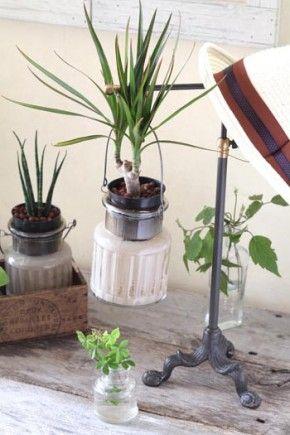 水やり不要!空きビンで観葉植物を水栽培