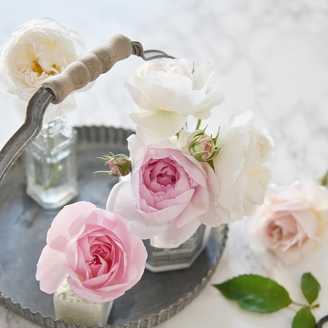 花びらの片付けが「楽ちん」なバラの飾り方