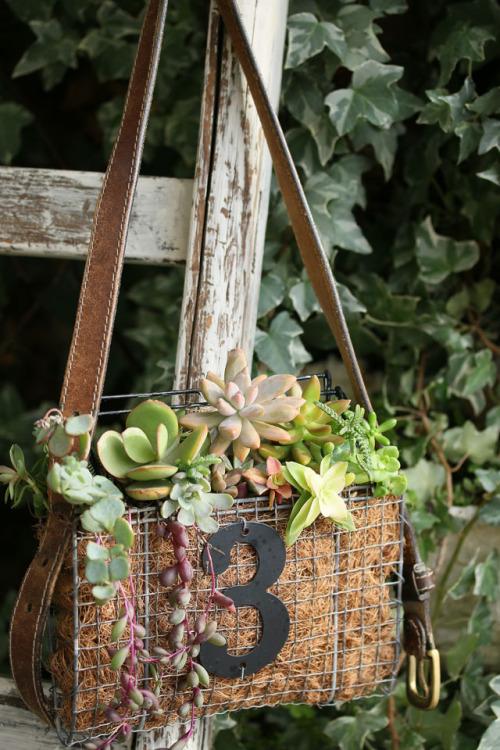 100均の焼き網で作った多肉植物の寄せ植えバッグ、ショルダーにして飾ろう