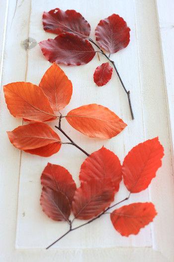 こちらの小枝はプリザーブド加工されたもの。 花材・資材を取り扱っているお店で購入することができます。