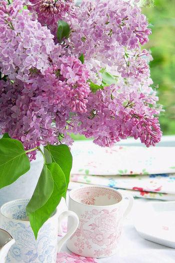 ライラック(英名)=リラ(仏名)が花咲く素敵な季節