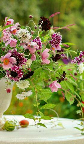 秋の花を楽しむ1 野に咲く花のように  窪田千紘フォト