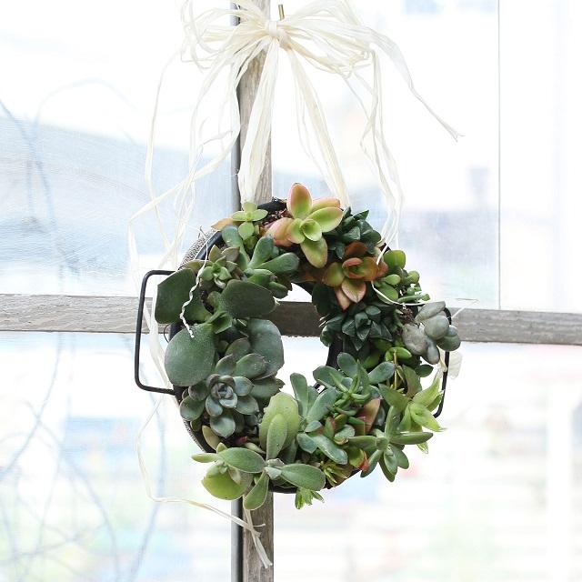 クリスマス♪ 100均のザルを使って、多肉植物のミニリースを作ろう♪