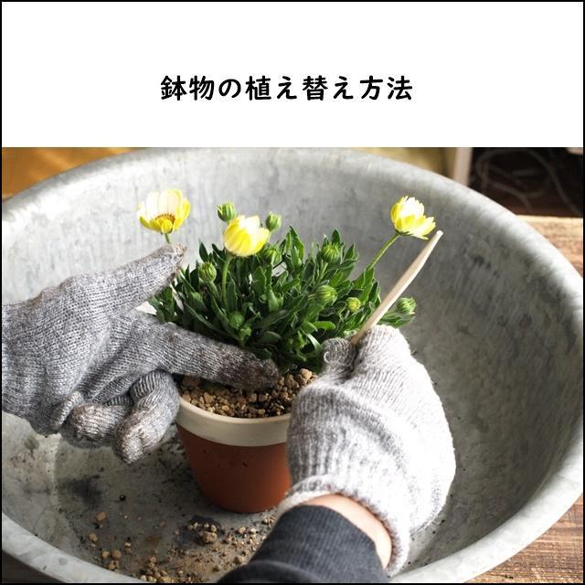 花屋直伝!「鉢の植え替え方法」のきほん