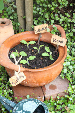 脇芽が出てくるまでは日陰に。 乾燥は大敵です。 土が乾く前に水やりをして下さいね。 やり過ぎにも注意です。 日陰であれば、 1日1回で大丈夫です。