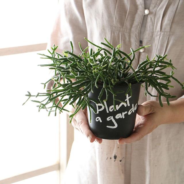 プラスチックの植木鉢でもOK! ゆる文字をプラスして男前インテリアの脇役に