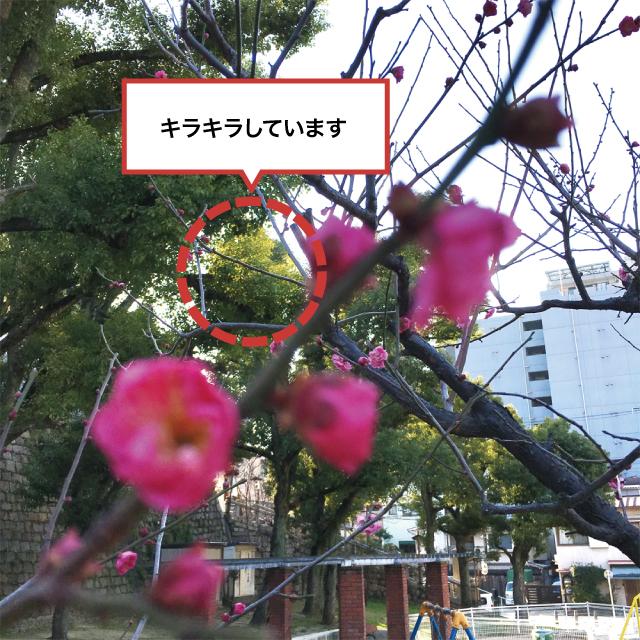 42ktoyohara_20160221_003
