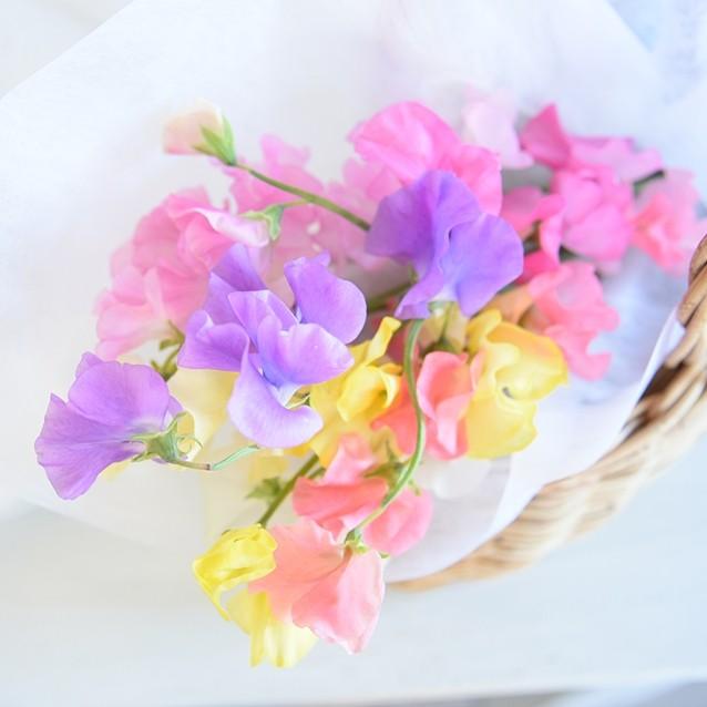 【四季の花便り】春の花*スイートピーの愉しみ方