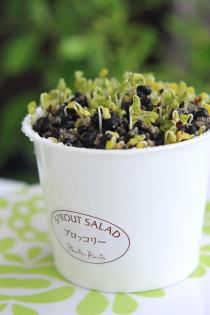 かわいい栽培キットで、プチ菜園
